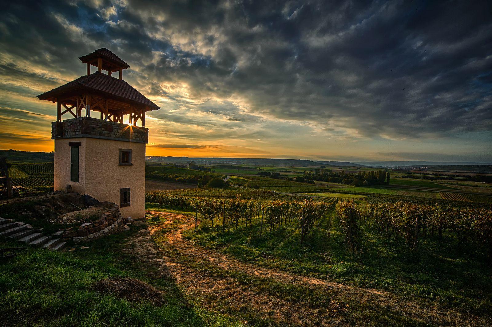 Sonnenuntergang in den Weinbergen bei Ebersheim